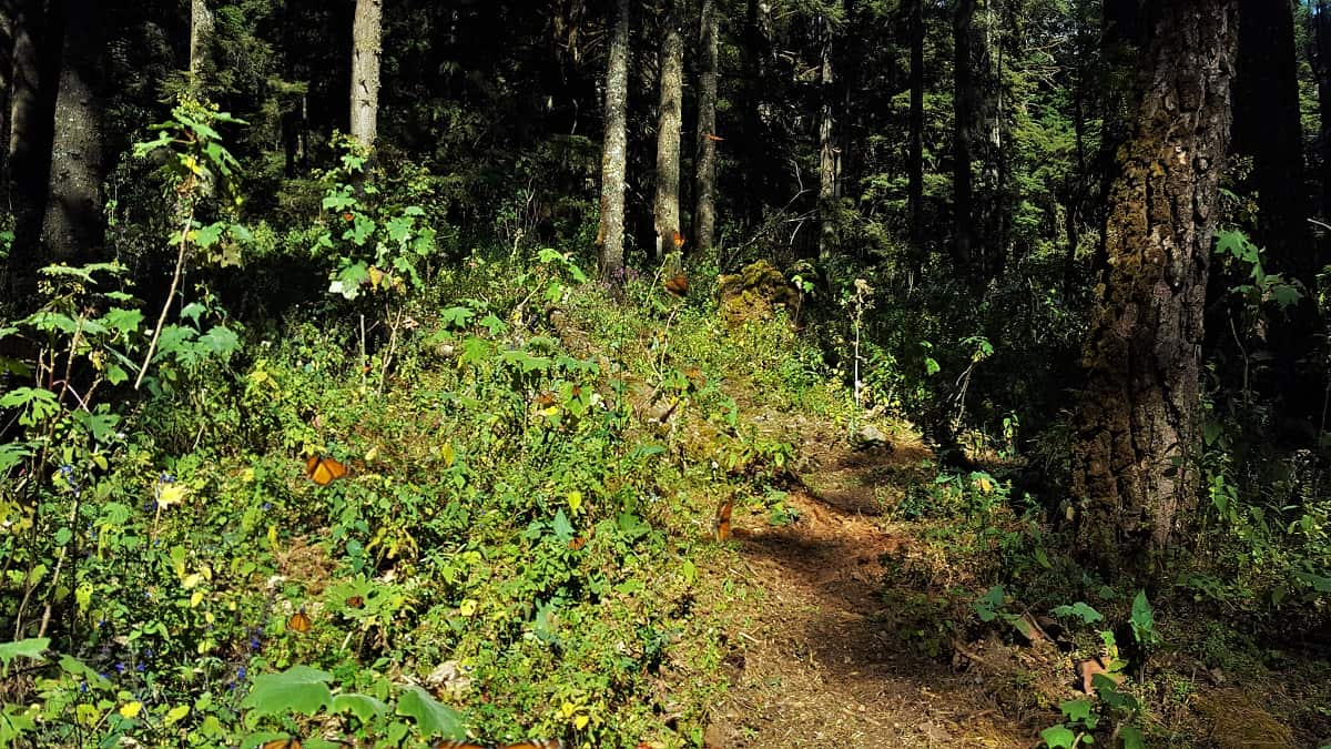 Butterfly Reserve