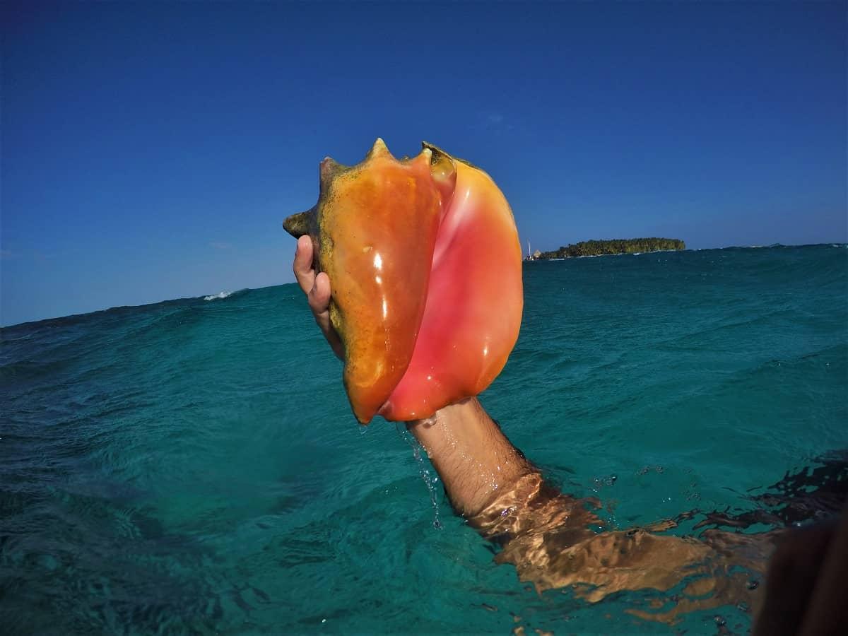 Vibrant Conch