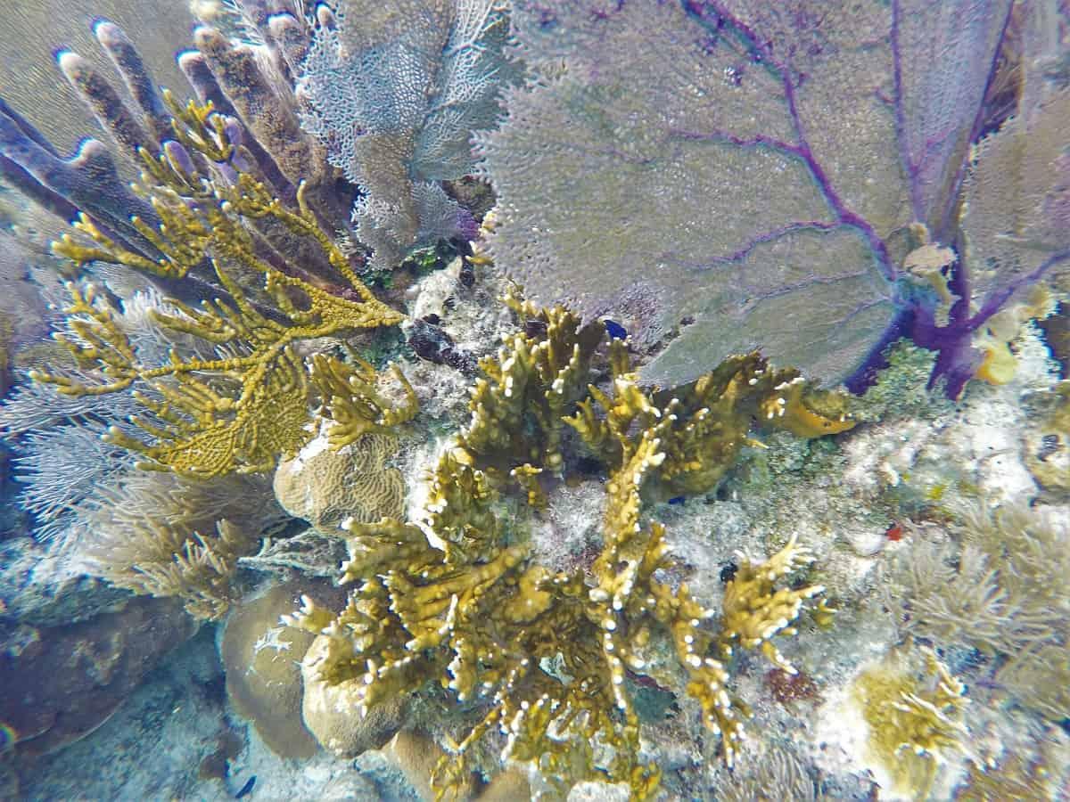 Coral Close-up