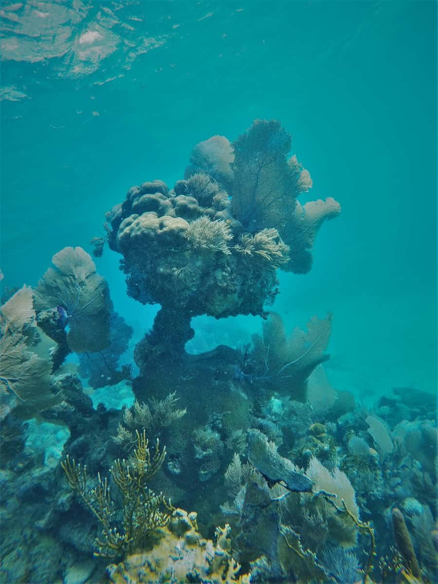 Awesome Coral