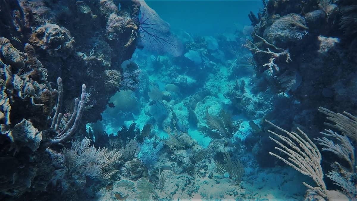 Glovers Snorkeling