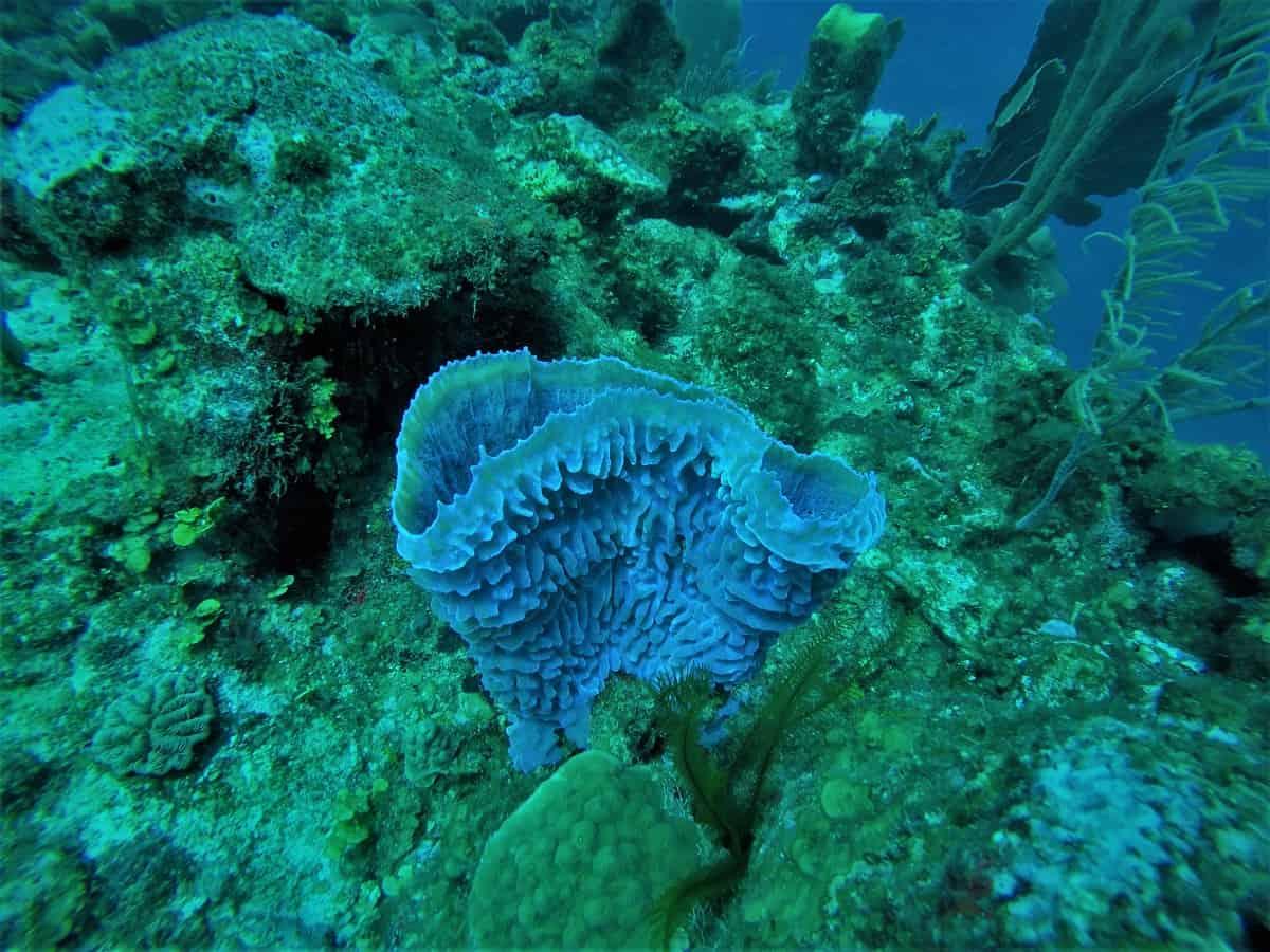 San Pedro Diving