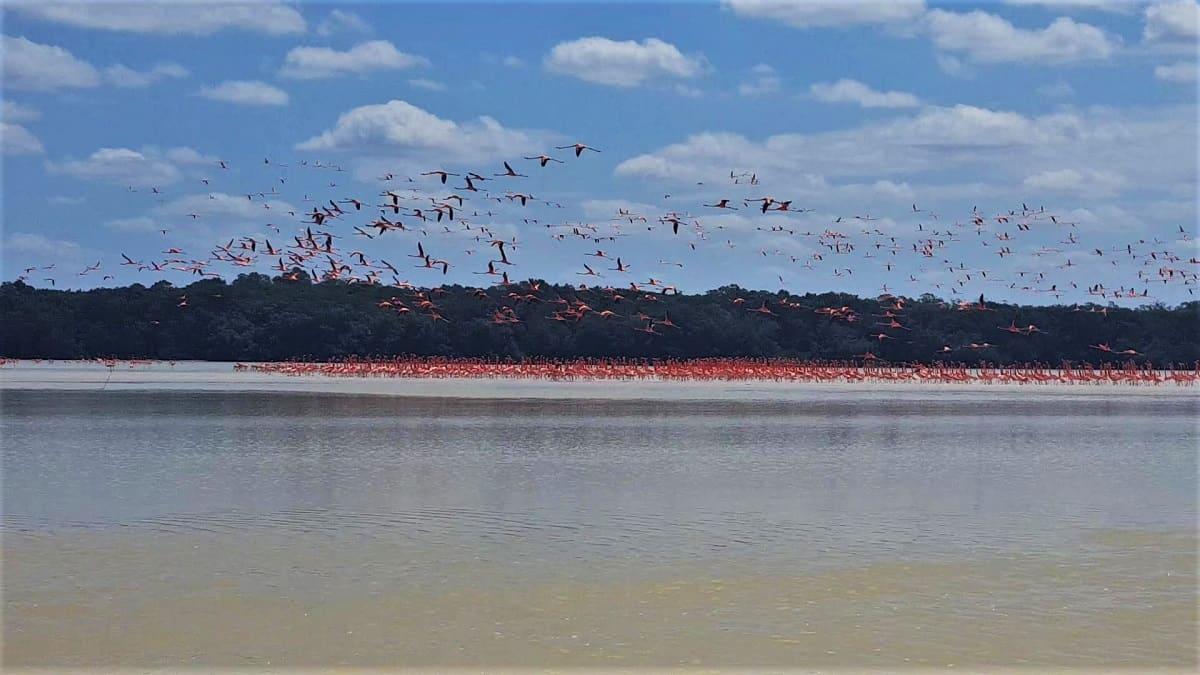 Sea of Flamingos