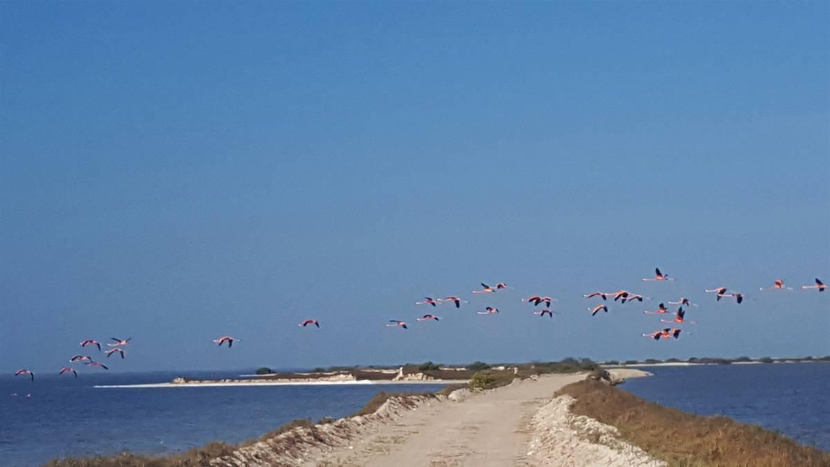 Las Coloradas Flamingos