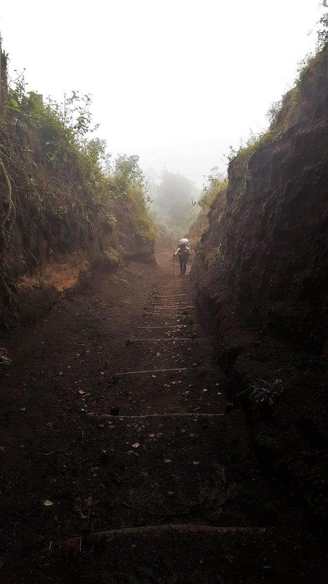 Lindsey Forbin's Ascent