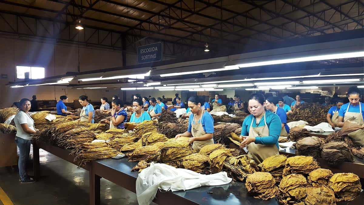 Rocky Patel Cigar Factory
