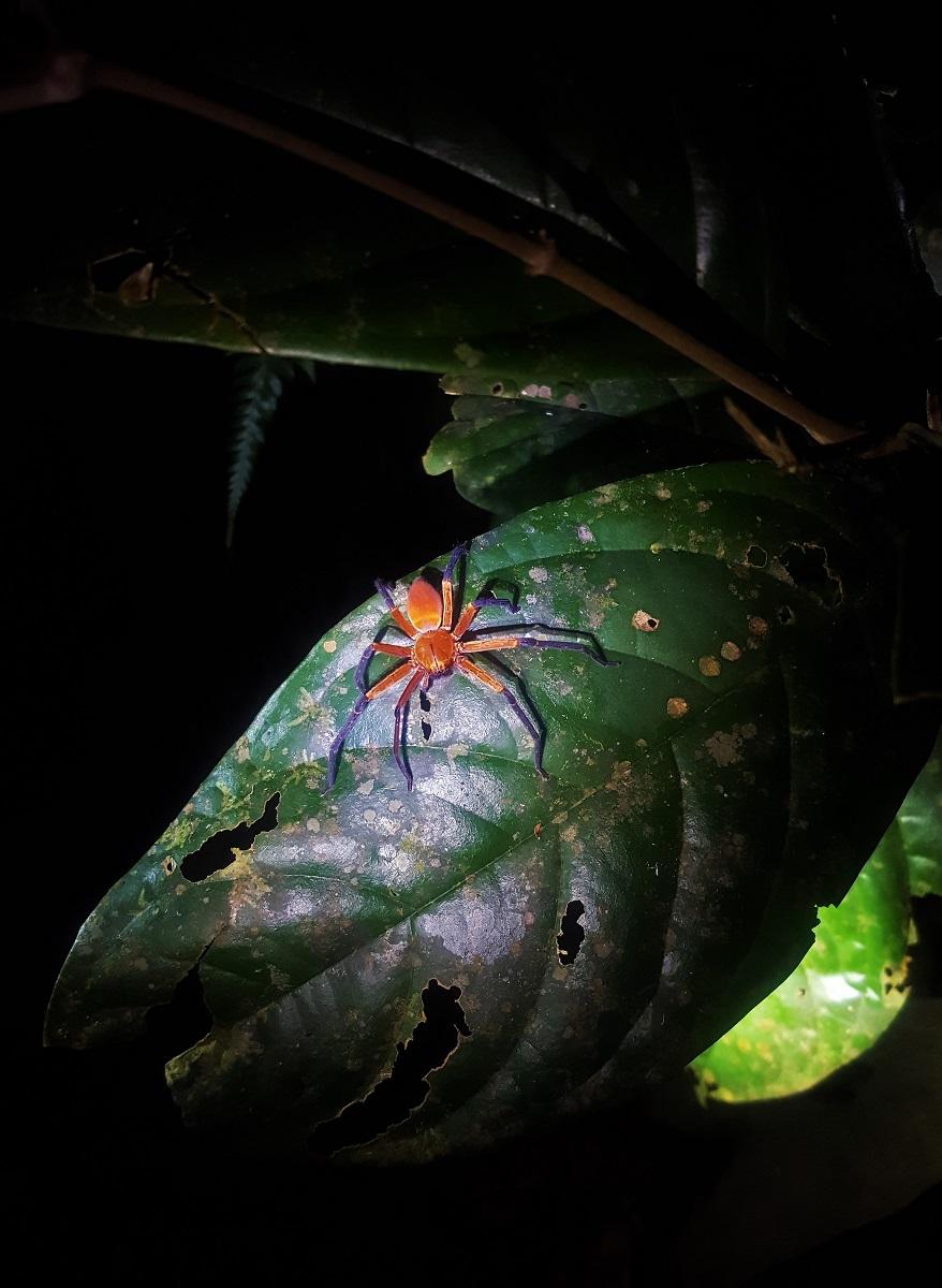 Sadala Spider