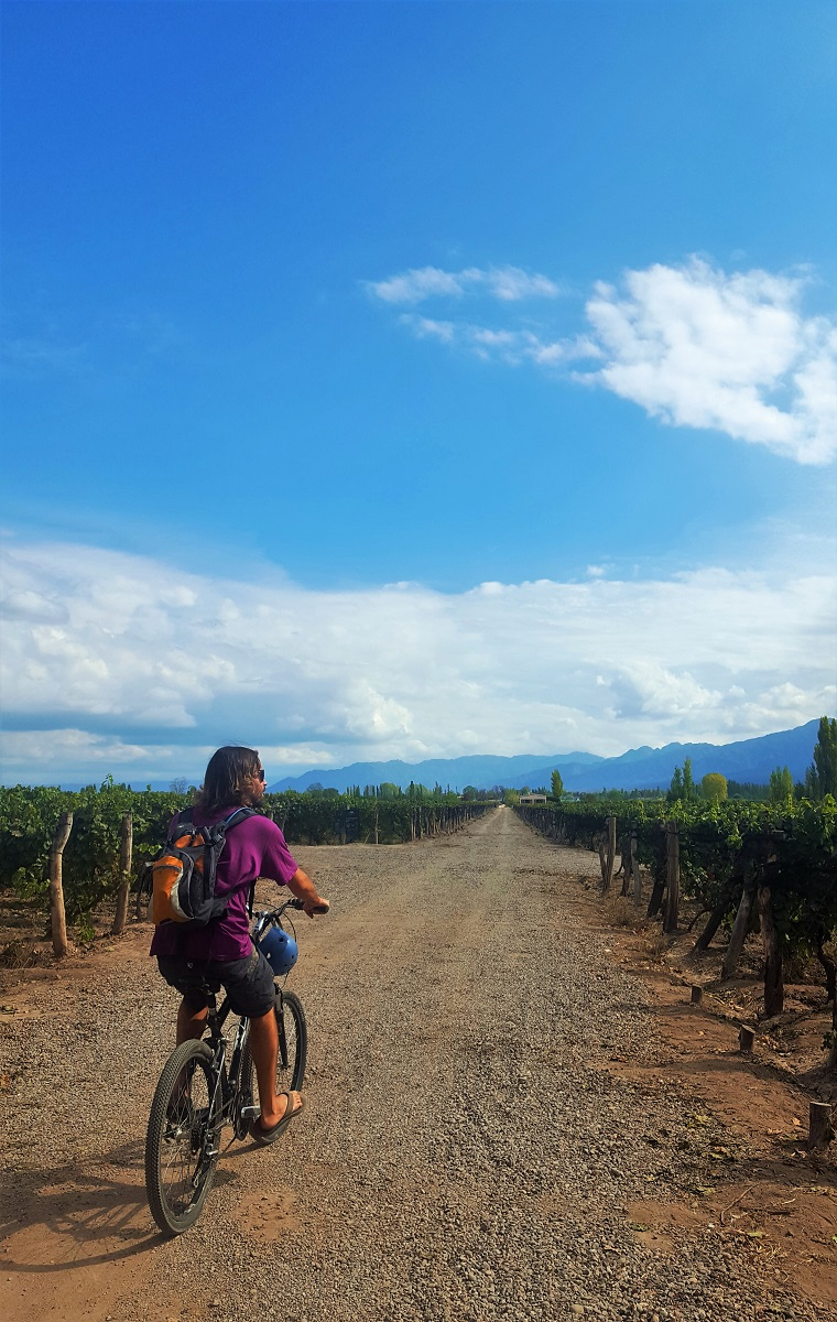 Biking Wine Tour