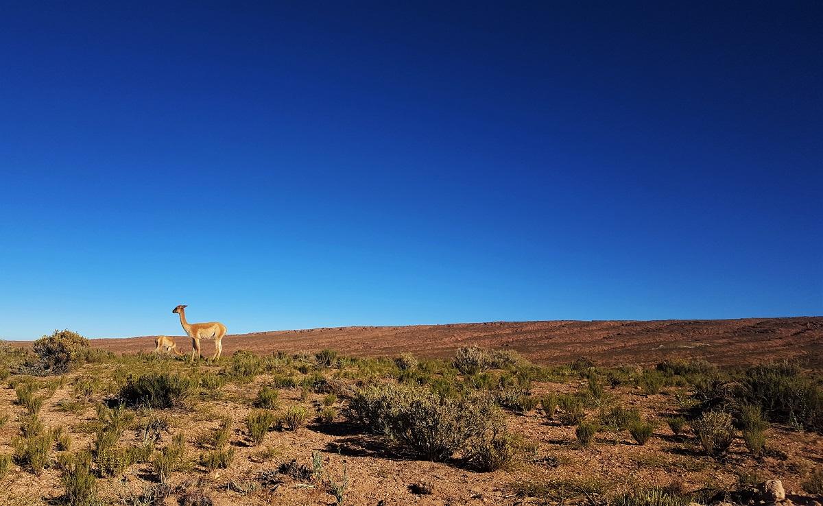 Lagunas Miscanti y Miniques - Atacama