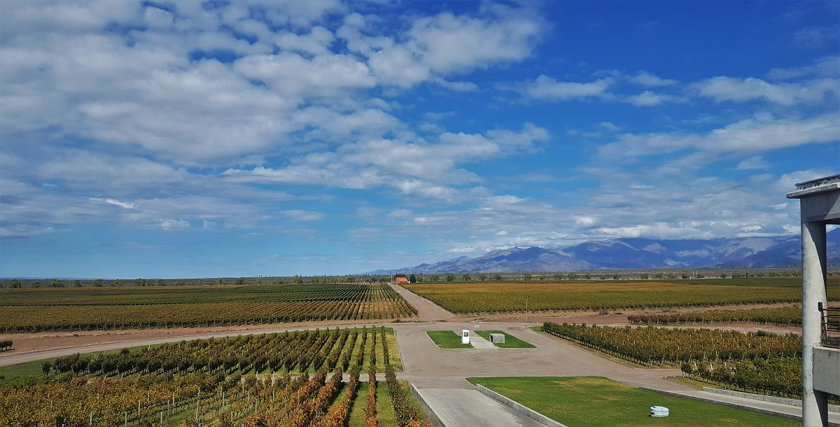 Monteviejo Vineyards