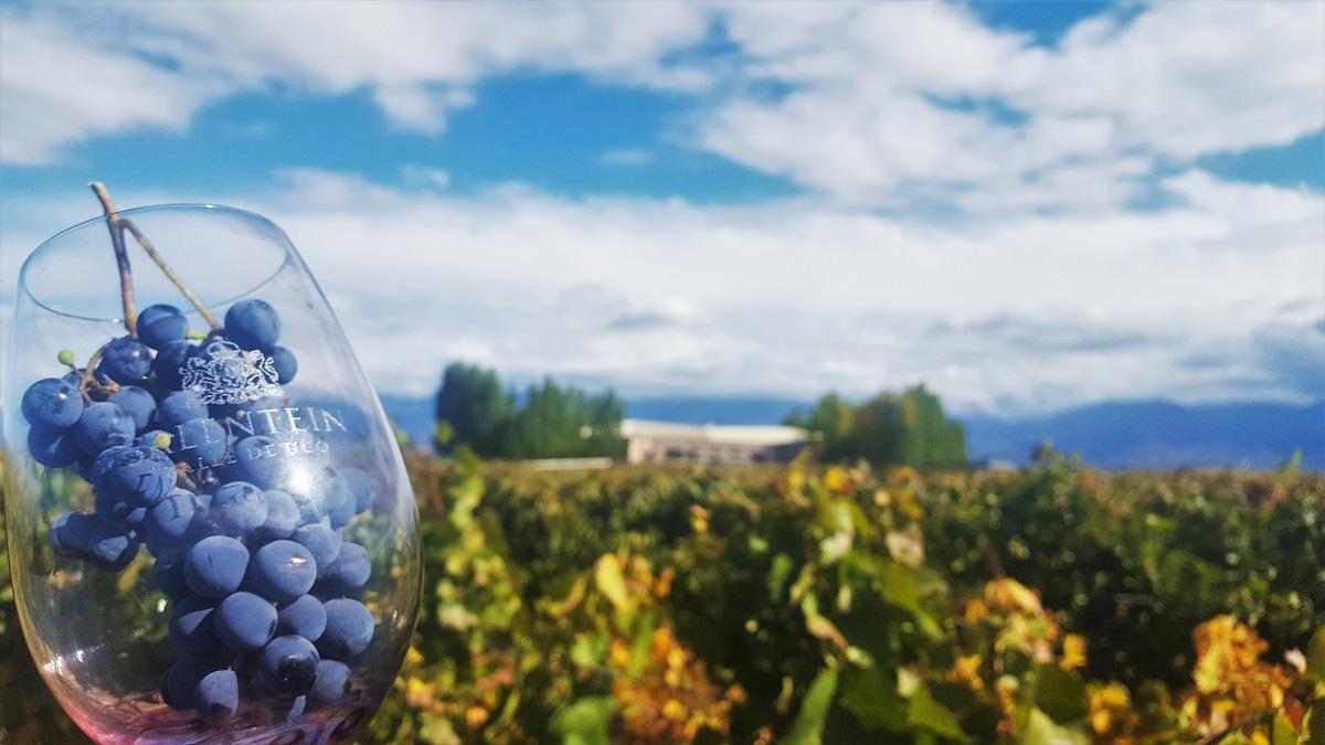 Salentein Vineyards